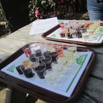 Plastic wine tasting cups !!!   One tray between two people!