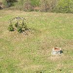 Uno scorcio del giardino