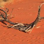 At the sun downer in the Kalahari Desert