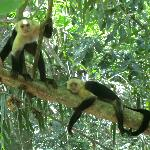 white face monkeys in Montezuma