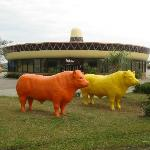 Peddlers Steakhouse with concrete cattle