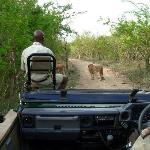 Blick aus dem Safarifahrzeug