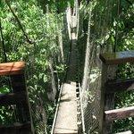 Falealupo Canopy Walk