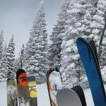 Skis n trees - on the way up the mountain on the snowcat.