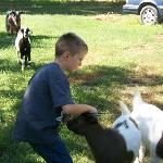 The kids loved petting the little goats.