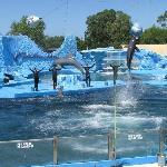 Espectáculo de Orcas y Delfines