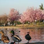 Lake Balboa Park Foto