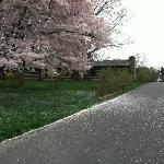 Early Spring Blossom @ Wolf Trap