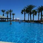 Pelican visits pool