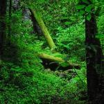 Verdant undergrowth