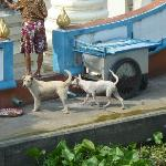 Some of the resident dogs that live at the Wat, across from Queen's Garden.