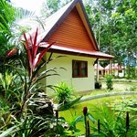 Bungalows in rubberplantation
