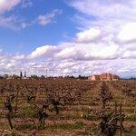 Quady Winery Foto