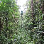 Bosque lluvial Aerial Tram