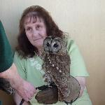 Handling and learning about other birds of prey