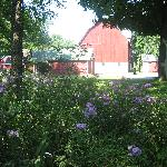 Barn and Backyard