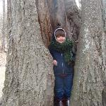 Look at me inside a tree!