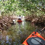 Kayaking through the mangroves!!