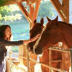 Our resident horses LOVE attention!