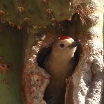 Bird inside cactus
