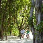 Cycle in lush vegetation with 17,000 coconut trees and ancient banyan trees