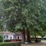 arbres spendides