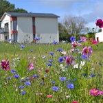 le champ de fleurs des hauts de Toulvern