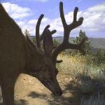 Wildlife abounds!  Check out the photos from the wildlilfe cameras on-site.