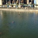 If you look carefully you can see many manatee in the water