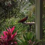 one of many birds-have camera ready