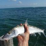 Bonefish!