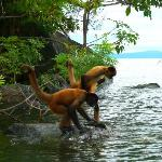 Spider monkeys on nearby island