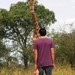 encuentro con una girafa en Marloth Park