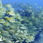 Incredible sea life at Aquarium
