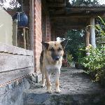 Rex the resident dog