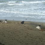 Stray dogs from down the beach - waiting respectfully for their supper