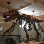 Sala de Animales prehistoricos