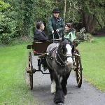 Horse and cart trip with Shawn