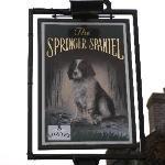 The Springer Spaniel