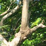 Casa Candiles - these two parrots came by twice a day