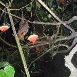 Night Safari - Bat Enclosure