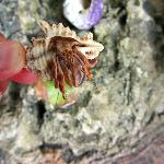 Hermit crab at Black Durgon
