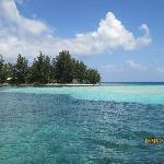 Snorkeling Utila