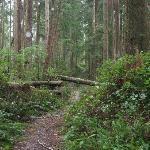 The West Coast Trail