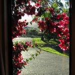 driveway to accommodation