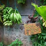 Free delicious bananas of various kinds