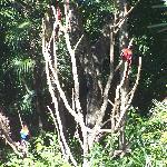 Entrée principale Xaman-Ha Aviary