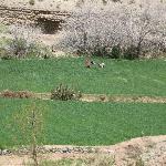 Donne Berbere al lavoro nella Valle del Dadés