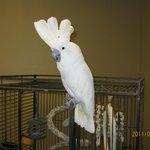 Black Hills Parrot Welfare & Education Center