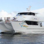 Whalesong Cruises - Day Tours